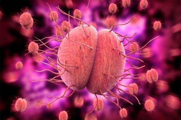 vi khuẩn lậu